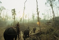 Central Myanmar logging camp where elephants are still very actively used