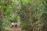Two cyclists talking in forest