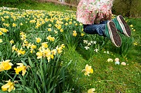 Excited young girl finding Easter eggs in field of daffodils