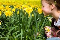 Young girl smelling yellow daffodils