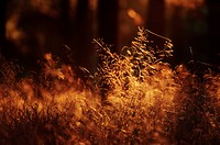Grass in back light