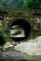 Bridge, Tijuca Forest, Rio de Janeiro, Brazil