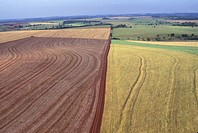 Plantation of Wheat and Soy, Paran&#225;, Brazil