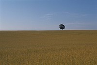 A Meadow And A Tree (thumbnail)