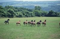 Running Horse In Hokkaido