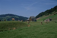 Cows And Green Forest In Switzerland