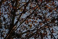 Leaf, São Paulo, Brazil