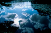 Sky Reflected On Pond