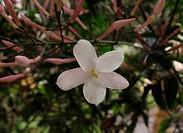 Flower, Campos de Jordão, São Paulo, Brazil