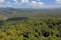 Tropical rain forest, Queensland, Australia