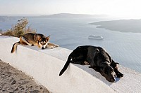 Sleeping dogs, Fira, Santorini, Greek