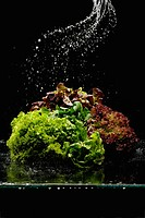 Water Pouring on Leaf Lettuce