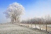 Field path in a winterly landscape with hoarfrost and fog, Sense district, Fribourg, Switzerland