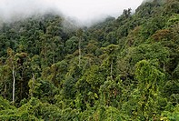 Rainforest in Kachin State, Myanmar