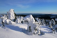 Landscape with snow-covered conifers in the German national park Hochharz in winter at the top of the Brocken mountain - Brocken, Harz, national park ...