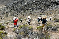 Local porters carry heavy loads Kikelewa Route Kilimanjaro Tanzania