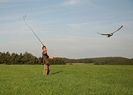 Falconer trains gyr falcon, Allgaeu, Germany