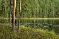 Lake, pines, Helvetinjaervi National Park, Finland, Europe