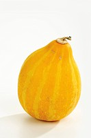 Gourd (Cucurbita)