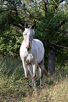Grey mare standing by tree