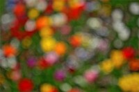 Colourful flowers, out-of-focus