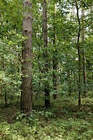 Mixed forest, Mecklenburg-Western Pomerania, Germany