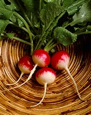 Agriculture _ Radishes in a basket