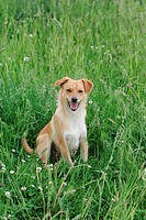 Mixed-breed dog on a meadow
