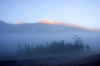 Forest and hills in dense morning mist, Kanas Conservation, Xinjiang Uyghur Autonomous Region, China