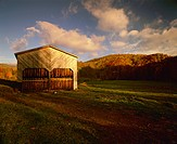 Agriculture _ Tobacco barn in a rural Autumn setting with curing Burley tobacco hanging inside / NC _ nr. Todd