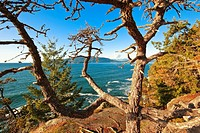 Tree with ocean at Lighthouse Park in West Vancouver, British Columbia, Canada