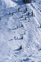 Ski tracks on a snowy slope in Rogers Pass, Glacier National Park, British Columbia, Canada