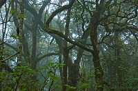 Rainforest, fog, mist, Blyde River, South Africa