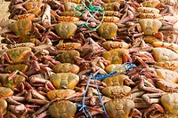 Ecuador. Guayaquil city. , Crabs ( jaibas ) in the market of  Caraguay