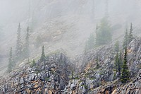 Fog rolls through a lightly wooded slope in the Canadian Rockies, Western Canada
