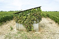 France, Champagne-Ardenne, Aube, overgrown shed in vineyard
