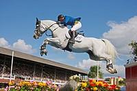 Holsteiner horse _ jumping