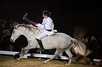 man riding on Lusitano horse