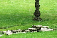 Park scene with rocks, tree trunk