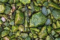 Wet, green stones