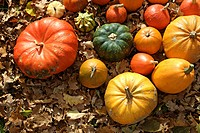 Colourful Cucurbitas (Cucurbita) on autumn leaves