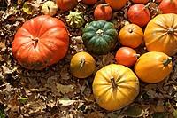 Colourful Cucurbitas (Cucurbita) on autumn leaves
