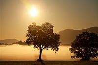 Morning mist near Haban, Pfaffenwinkel, Upper Bavaria, Bavaria, Germany, Europe