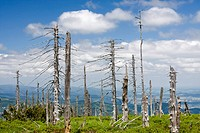 Dead forest on Kowarski Grzbiet, Krkonose National Park, Poland, Europe