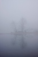 Vogelinsel Island in fog, Donau river wetlands, Ingolstadt, Bavaria, Germany, Europe