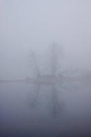 Vogelinsel Island in fog, Donau river wetlands, Ingolstadt, Bavaria, Germany, Europe