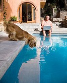 Senior man laughing at dog drinking from swimming pool