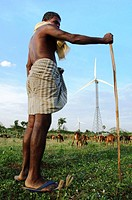 A shepherd herding his goats past the wind turbines Kanyakumari, India