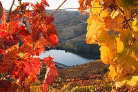 Vineyards and Douro River, Cima Corgo zone, Portugal