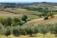 Bibbona Tuscany Italy Gentle rolling hills of the region around Bibbona and the distant mediterranean sea in the background